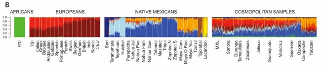 The genetics of Mexico recapitulates Native American substructure and affects biomedical traits. Sciencemag.